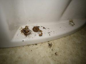 トイレのグラグラ ナット破壊の写真