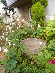 札幌市豊平区 西岡 詰まり修理 問題の枡